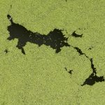 Effects of algae bloom on drinking water